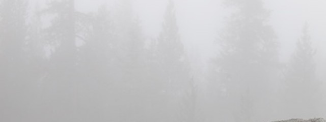 Foggy Treetops, Yosemite National Park