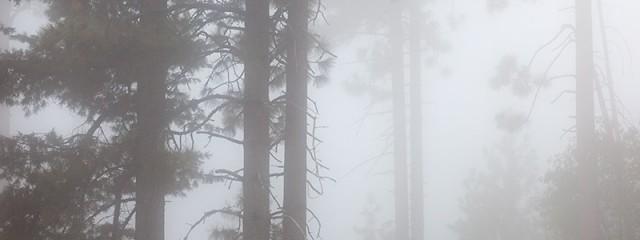 Quiet of the Fog, Yosemite National Park