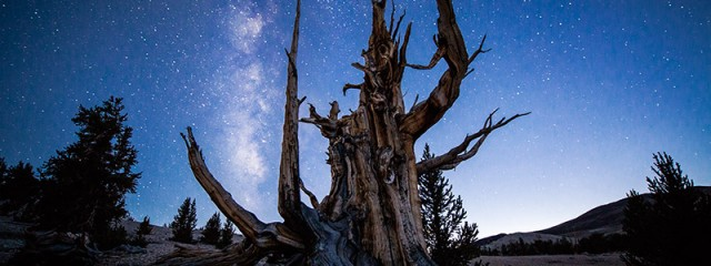 The Old Guard – Bristlecone Pine Forest, California