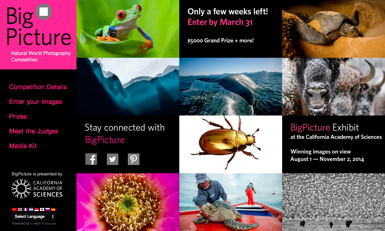 Don't Miss The Big Picture Natural World Photography Competition