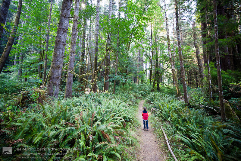 Taking in the atmosphere of the Redwoods