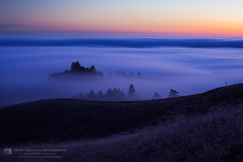 Fog flows through the trees below Mount Tamalpais and over the Pacific Ocean