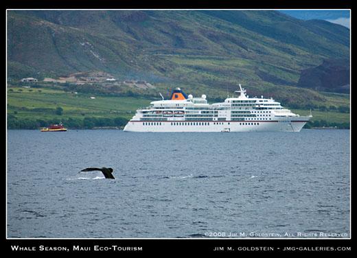 Whale Season, Maui Ecotourism travel photo by Jim M. Goldstein