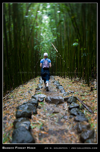 Hiking Through A Bamboo Forest Haleakala National Park Maui Hawaii photo by Jim M. Goldstein
