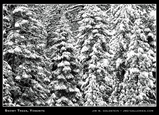 Snowy Trees Yosemite nature photo by Jim M. Goldstein, Yosemite National Park