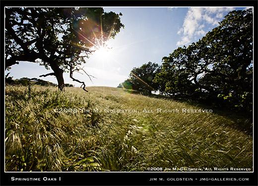 Springtime Oaks landscape photo by Jim M. Goldstein