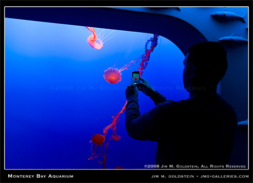 Monterey Bay Aquarium visitor taking photo with iphone photo by Jim M. Goldstein