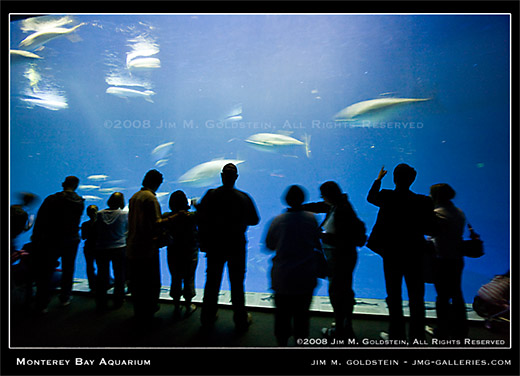 Monterey Bay Aquarium crowd enjoying the million gallon tank by Jim M. Goldstein