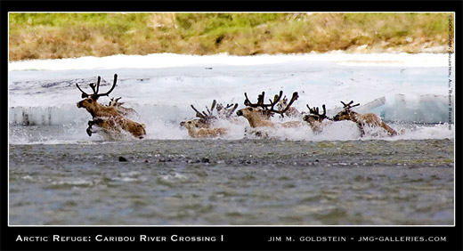 Arctic Refuge: Caribou River Crossing I photo by Jim M. Goldstein