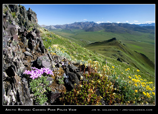 Arctic Refuge: Caribou Pass Phlox View landscape photo by Jim M. Goldstein