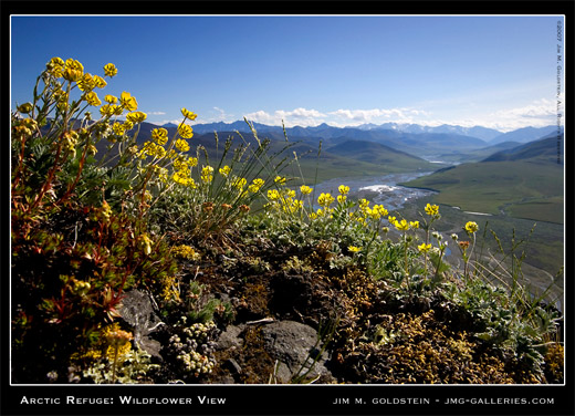 Arctic National Wildlife Refuge Wildflower View landscape photo by Jim M. Goldstein