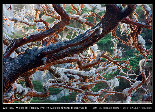 Lichen, Moss & Trees, Point Lobos State Reserve nature photo by Jim M. Goldstein