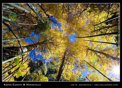 Aspen Canopy and Horsetails nature photo by Jim M. Goldstein, fall color