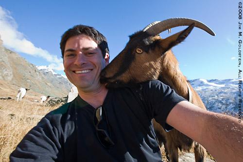 Friendly Swiss Alps Goat, Switzerland travel photo by Jim M. Goldstein