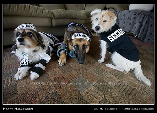 Happy Halloween - Dog Photo by Jim M. Goldstein