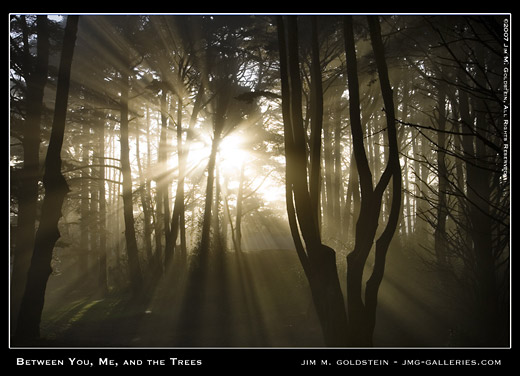 Morning Sunlight and Fog - Between You, Me and the Trees landscape photo by Jim M. Goldstein