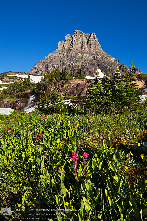 Wildflowers and waterfalls in front of Clements Mountain in Glacier National Park, Montana