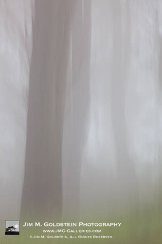 Foggy Forest - Fine Art Photography by Jim M. Goldstein