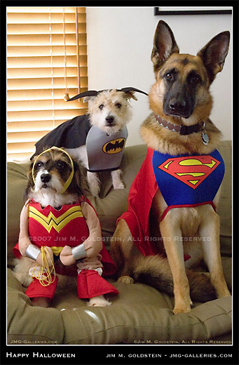 <img300*0:http://www.jmg-galleries.com/blog_images/dog_costumes_halloween07_520c.jpg>
