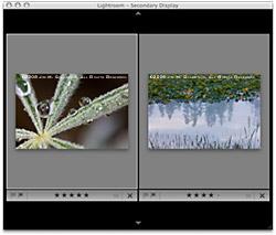 Lightroom 2 - Multiple Displays Compare View