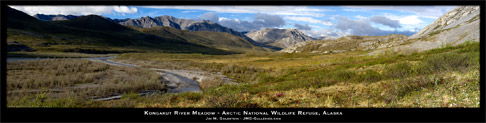 Kongakut River Meadow - Arctic National Wildlife Refuge