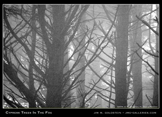 Cypress Tree Fog landscape photograph by Jim M. Goldstein