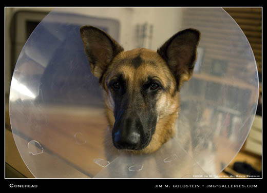Conehead pet photography by Jim M. Goldstein